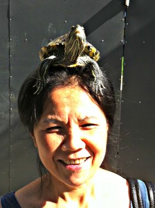 Nothing to see here. Move along.  Just a turtle on her head.