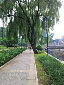 Weeping Willows cover most of the walkway.