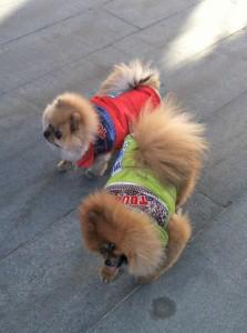 Two cuties in their winter gear!