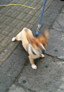 He's so hyper the camera can't even focus on him!